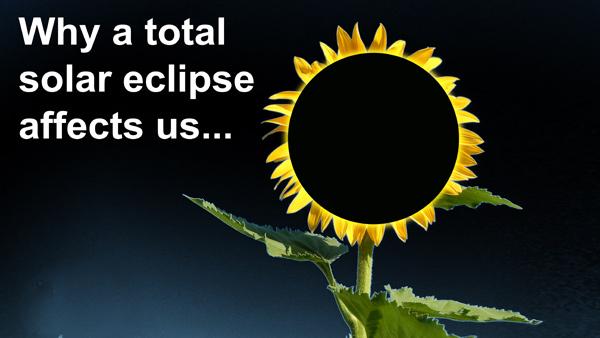 Sunflower-Eclipse-bestDark